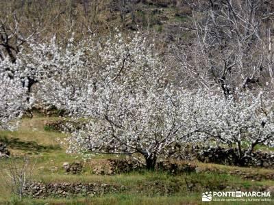 Cerezos en flor en el Valle del Jerte - senderismo fácil;singles alcobendas camino a casa
